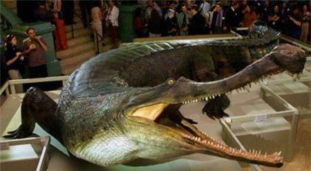 Bí quyết sinh tồn của cá sấu cùng thời khủng long Ảnh 1