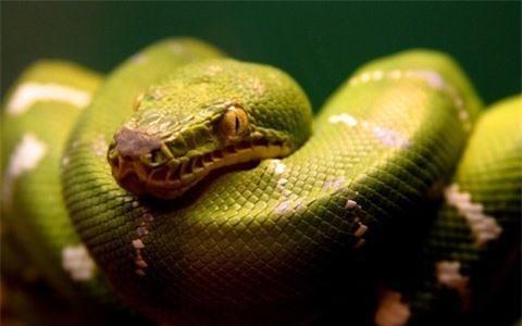 Những điều thú vị về loài rắn Ảnh 1