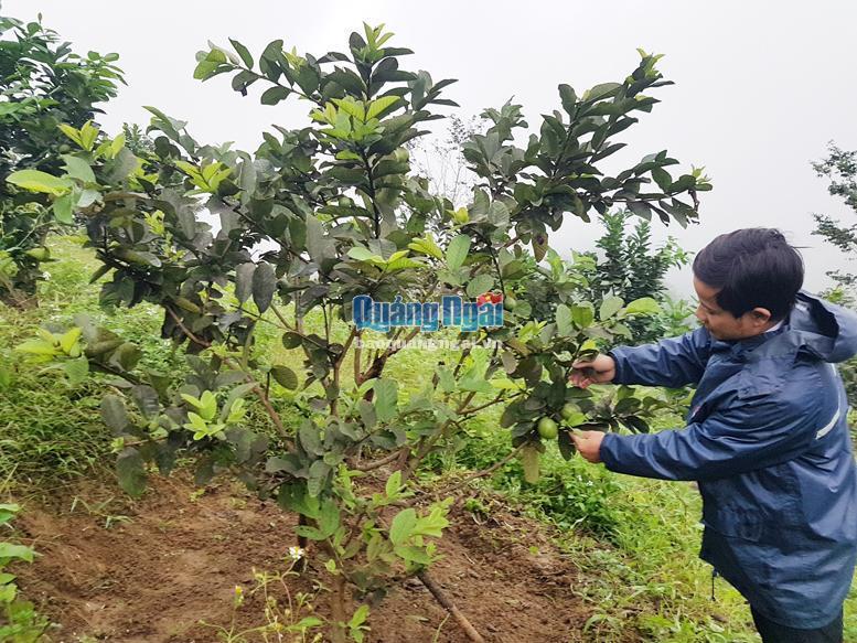 Đấu thầu qua mạng trong lĩnh vực nông nghiệp: Còn nhiều bất cập Ảnh 1