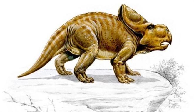 Công cụ đặc biệt loài khủng long cổ dùng để tán tỉnh bạn tình Ảnh 1