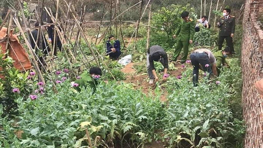 Bắc Giang: Một gia đình trồng gần 3.000 cây cần sa trong vườn Ảnh 1