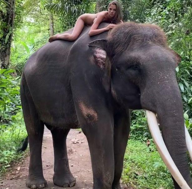 Người mẫu 22 tuổi phải xin lỗi sau khi chụp ảnh khỏa thân cùng với loài voi đang trên bờ vực tuyệt chủng Ảnh 2