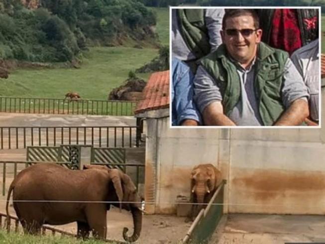 Tử vong sau khi bị voi dùng vòi ném vào hàng rào sắt Ảnh 1