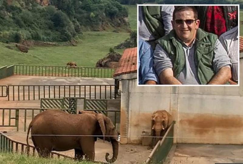 Tử vong sau khi bị voi dùng vòi ném vào hàng rào sắt Ảnh 2