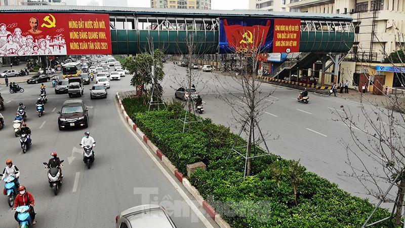 Cận cảnh hàng phong lá đỏ khô héo sắp bị thay thế ở Hà Nội Ảnh 2