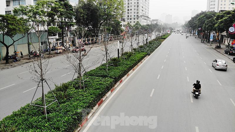 Cận cảnh hàng phong lá đỏ khô héo sắp bị thay thế ở Hà Nội Ảnh 10