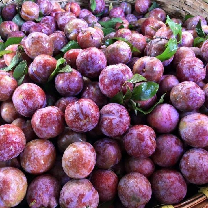 Đưa trái cây đặc sản Sơn La lên 'sàn' Ảnh 1