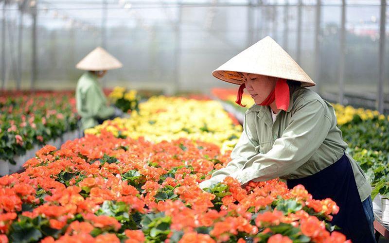 Xây dựng Đà Lạt trở thành trung tâm sản xuất giống hoa lớn nhất cả nước Ảnh 1