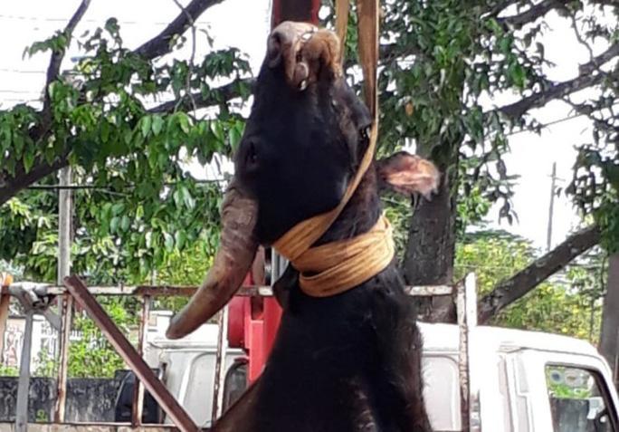 Bò tót rừng 700 kg chết trong khu bảo tồn ở Đồng Nai Ảnh 1