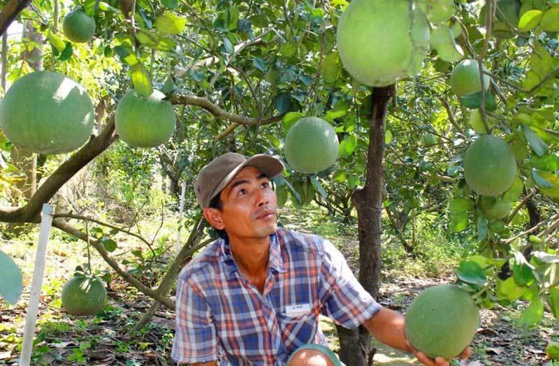 Trái cây đồng loạt giảm giá, đặc sản mà rẻ hơn rau Ảnh 1