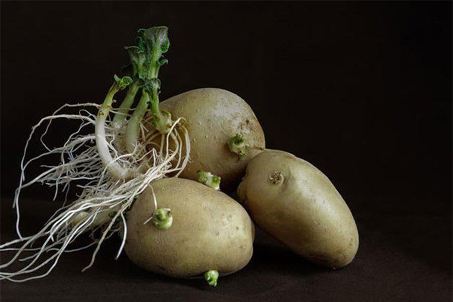 Những bộ phận cực độc của rau củ, ăn một miếng 'hối không kịp' Ảnh 1