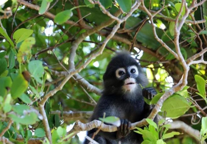 Cứu chú khỉ con, khoảng 2 tháng sau hơn 20 người thoát chết trong gang tấc Ảnh 1