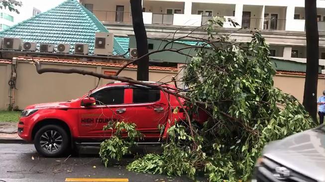 Cây xanh tét nhánh rơi trúng xe ô ô trong mưa lớn ở quận 1 Ảnh 1