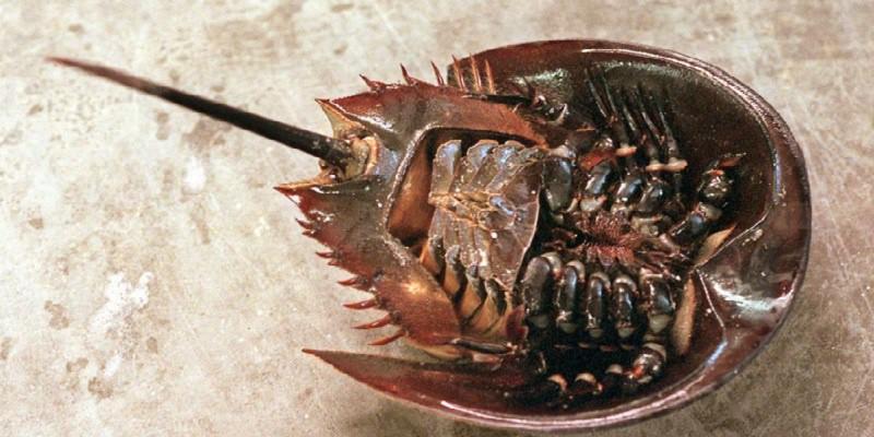 Loài vật thường bị nhầm với sam biển, gây tử vong trong vài phút Ảnh 8