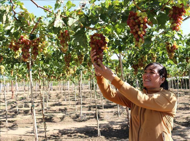 Algeria tiếp tục cấm nhập khẩu 13 loại trái cây, doanh nghiệp Việt Nam không bị ảnh hưởng Ảnh 1