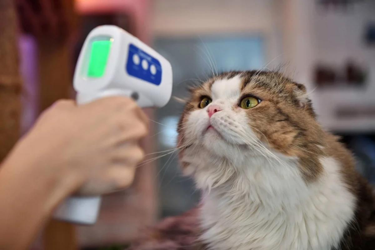 Phát hiện trường hợp lây nhiễm SARS-CoV-2 từ người sang mèo Ảnh 1