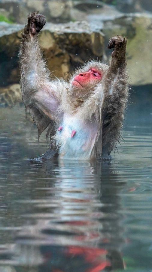 Loạt ảnh chứng minh động vật hoang dã cũng biết 'diễn hài' không kém con người Ảnh 10