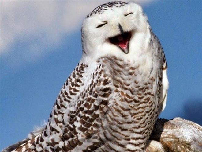 Loạt ảnh chứng minh động vật hoang dã cũng biết 'diễn hài' không kém con người Ảnh 13