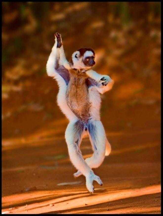 Loạt ảnh chứng minh động vật hoang dã cũng biết 'diễn hài' không kém con người Ảnh 4