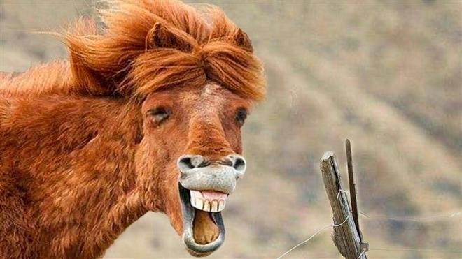 Loạt ảnh chứng minh động vật hoang dã cũng biết 'diễn hài' không kém con người Ảnh 6