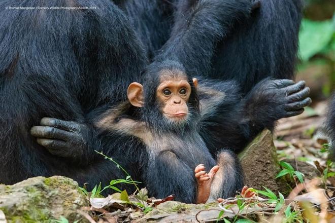 Loạt ảnh chứng minh động vật hoang dã cũng biết 'diễn hài' không kém con người Ảnh 7