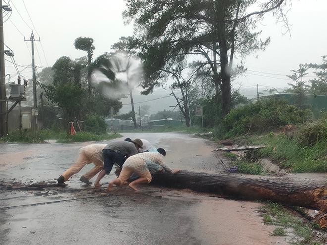 CSGT dầm mưa cùng người dân dọn cây gỗ lớn đổ ngang đường Ảnh 2