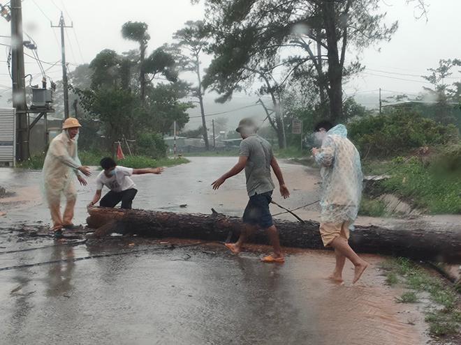 CSGT dầm mưa cùng người dân dọn cây gỗ lớn đổ ngang đường Ảnh 1