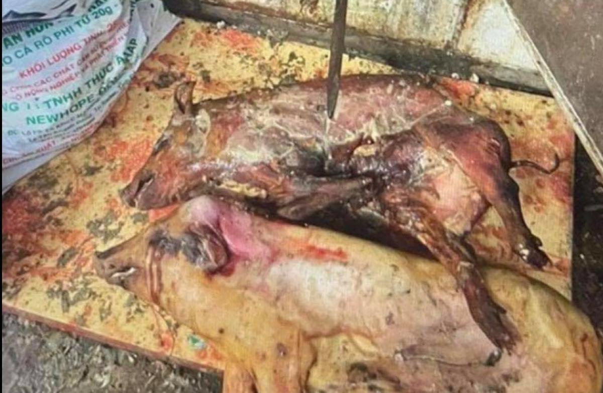Phát hiện cả tấn thịt lợn bốc mùi hôi thối trong tủ cấp đông Ảnh 1