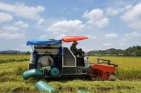 Nông dân Đạ Tẻh trúng mùa lúa ST24