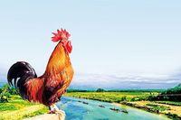 Nơi 'một con gà gáy ba nước cùng nghe' ở vùng nào của nước ta?