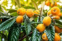 Những loại trái cây thông dụng giúp đẹp da hơn cả mỹ phẩm