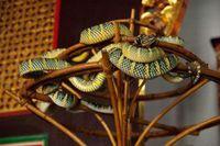 Ngôi đền huyền bí có hàng nghìn con rắn độc sinh sống