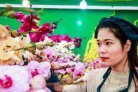 'Nữ hoàng loài lan' vượt 1000km ra Hà Nội phục vụ năm mới