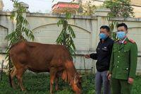 Thanh niên 8X thuê xe tải từ Nghệ An sang Hà Tĩnh... trộm bò