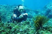 Bảo vệ rạn san hô ở vùng biển Cù lao Chàm