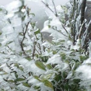 Bắc Bộ rét đậm rét hại, có khả năng xảy ra băng giá, mưa tuyết