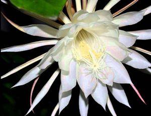 7 loài hoa đắt giá nhất hành tinh
