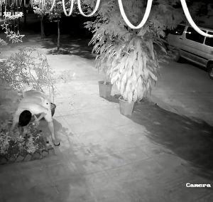 Clip: Hai thanh niên đánh ô tô đi... nhổ trộm hoa hồng