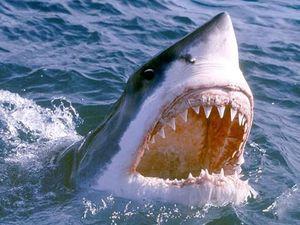 Cá mập tấn công 2 trẻ em tại New York