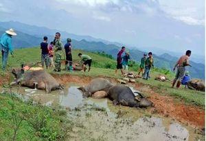 Lạng Sơn: Sét đánh chết 9 con trâu