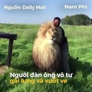 Nhân viên bảo tồn vuốt ve sư tử như mèo con ở Nam Phi