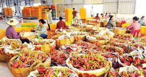 Trung Quốc siết nhập khẩu: Nông sản Việt Nam đối diện thách thức