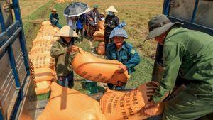 Người nông dân có thể lời 30-40 triệu đồng/ha từ loại gạo đặc biệt