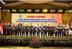 Tăng cường hợp tác trong vấn đề an ninh lương thực giữa các nước ASEAN +3