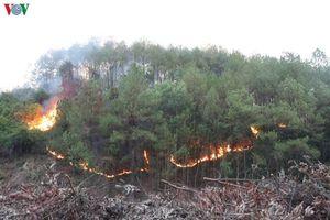 Phạt 3 triệu đồng đối với 2 thanh thiếu niên gây nguy cơ cháy rừng