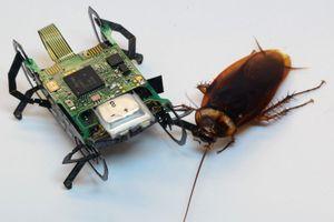 Gián đáng ghét nhưng 'robot gián' này lại là tương lai ngành cứu hộ