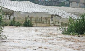 Phú Quốc, Đà Lạt ngập nặng: Hậu quả của phát triển nóng