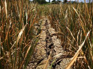 Đắk Lắk: Hạn hán kéo dài gây thiệt hại hơn 1.000 ha lúa nước