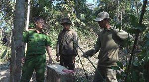 Bắt quả tang nhóm người ngang nhiên chặt hạ gỗ rừng ở Đắk Lắk