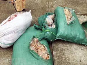 Thanh Hóa: Bắt giữ xe ôtô chở 260kg thịt lợn, da lợn ôi thiu